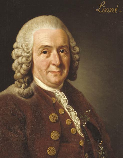 Swedish botanist Carl Linnaeus