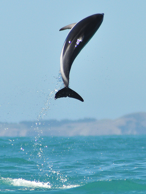 dolphin leap high