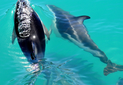 dolphins close up