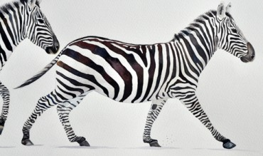Zebra running detail 3