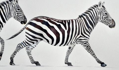 Zebra running detail 3