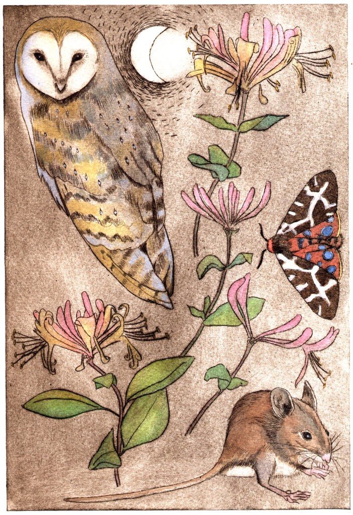 Barn owl and wood mouse