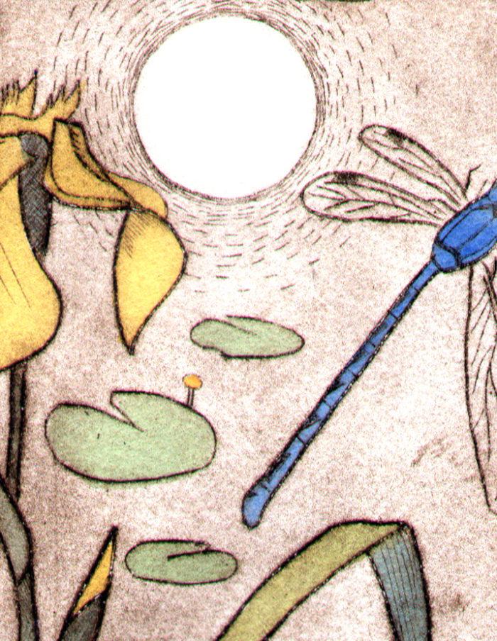 coot-carp-detail-damselfly