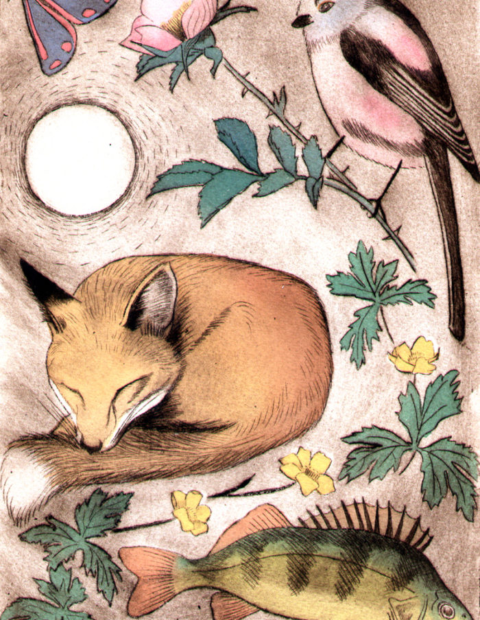 Fox and perch