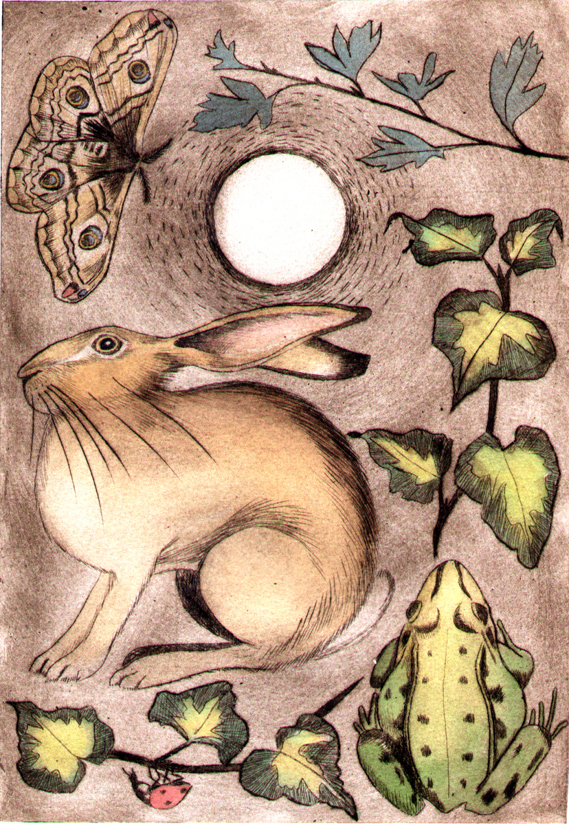Hare and frog