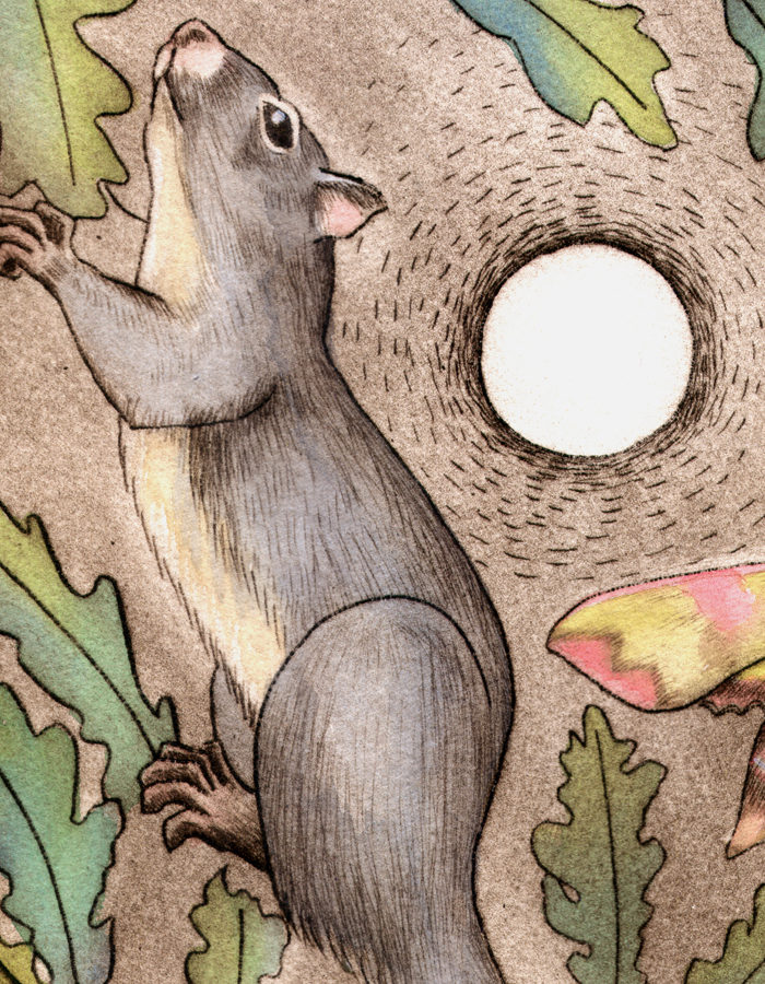 squirrel-oak-detail