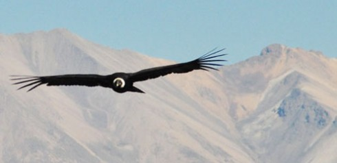 The birds of Peru – coasts and mountains