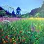 Meadow near Tubney