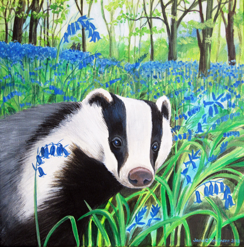 Badger and bluebells