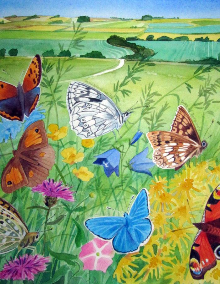 Ridgeway butterflies
