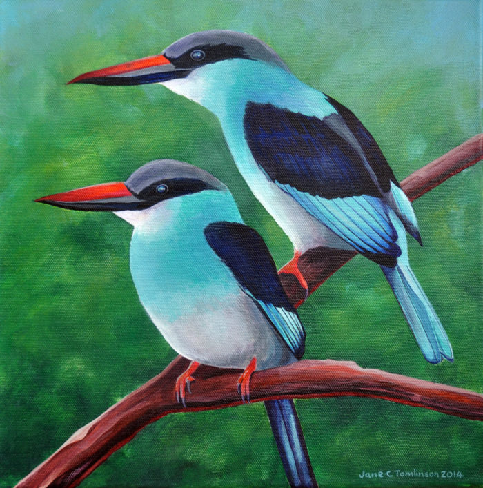 Blue breasted kingfishers