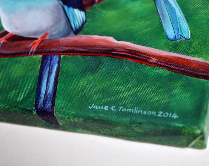 bluebreastedkingfisherdetail1