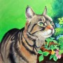 Little Miss Whiskers
