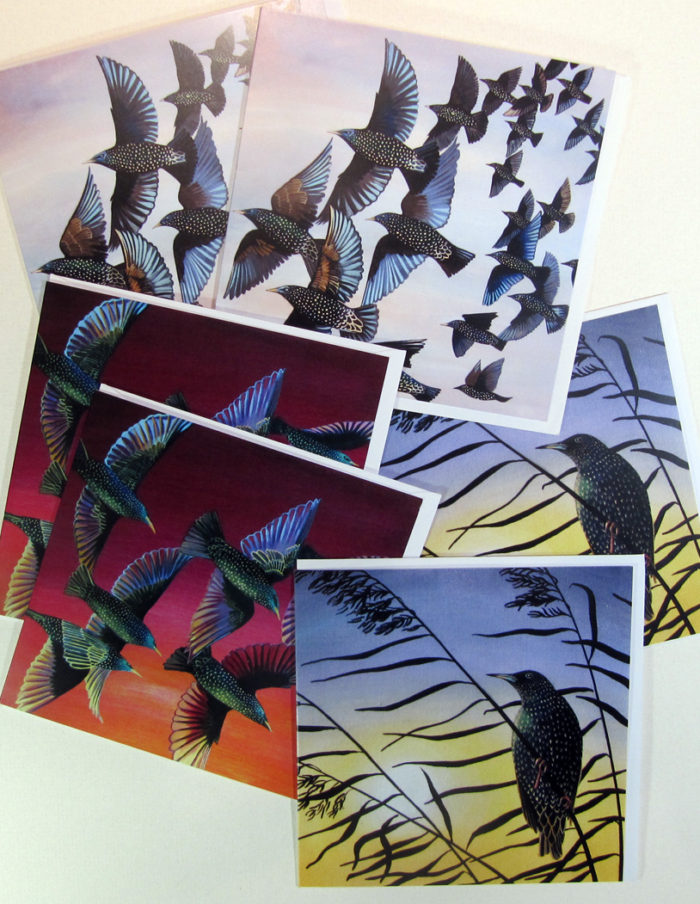 starlings greetings cards