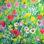 Dutch field margin flowers