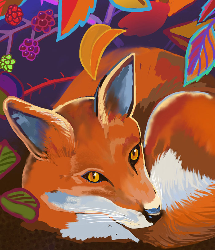 Fox-blackberries-ipad-face-detail