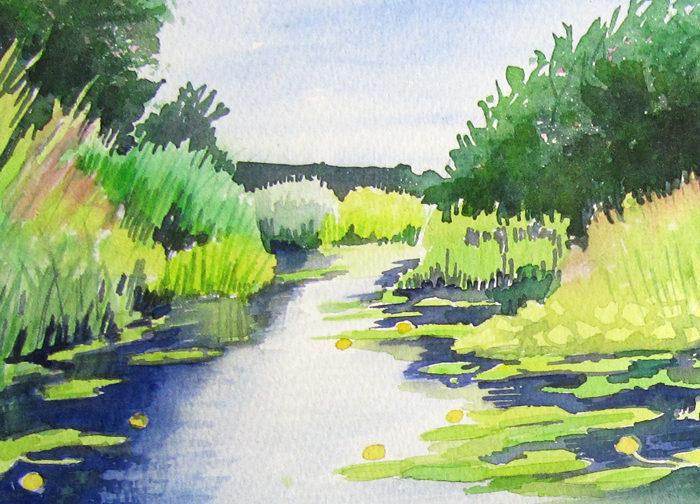 Wharf Stream Waterlilies