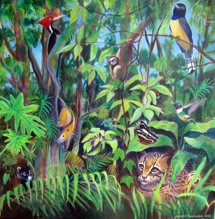 Rainforest-Central-America
