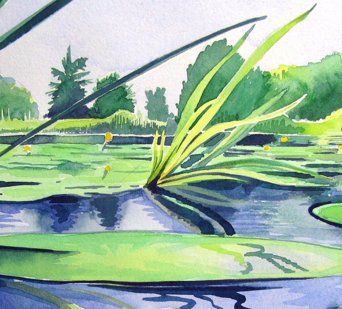Yellow-water-lily-reeds