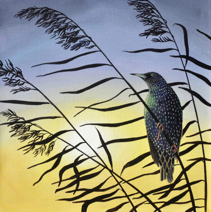 Starling at sunset