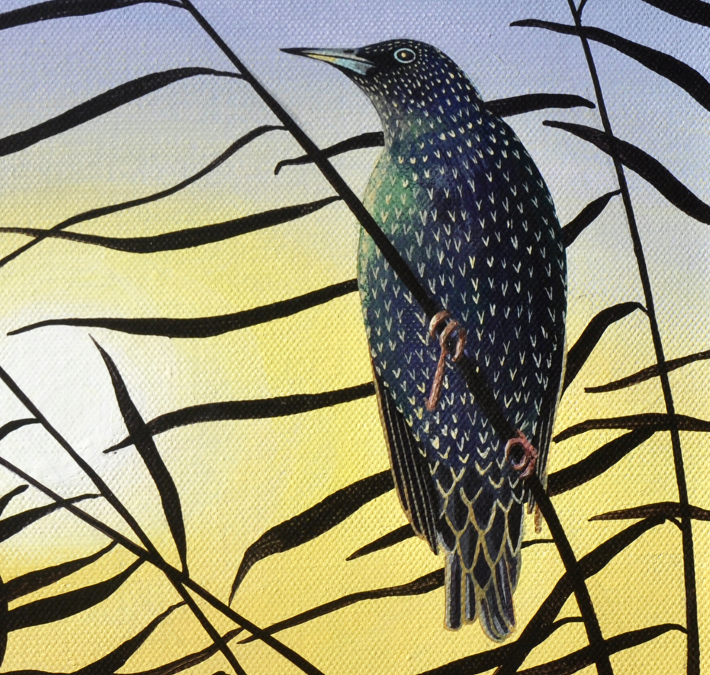 Starling at sunset -detail