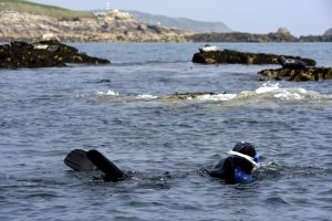 Photo of Jane swimming with wild grey seals in the Isles of Scilly