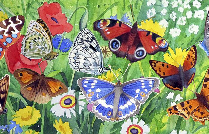 Mug_butterflies