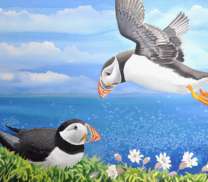 Puffins and sea campion