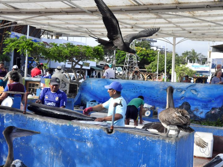 Galapagos: all the fun of the fish market