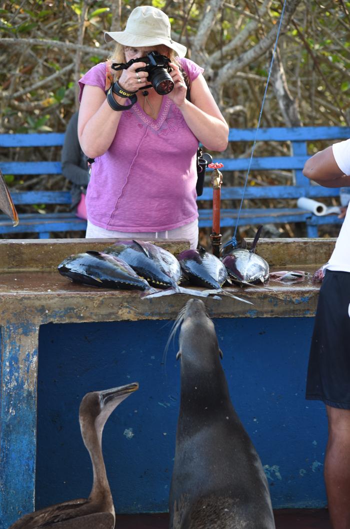 Puerto Ayora Fish Market Galapagos