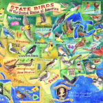 State Birds of the USA