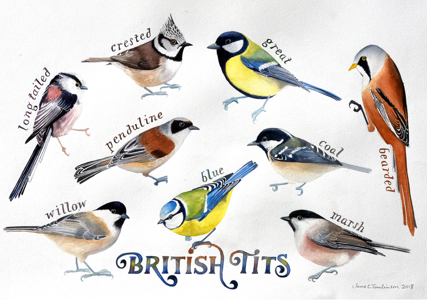 British tits