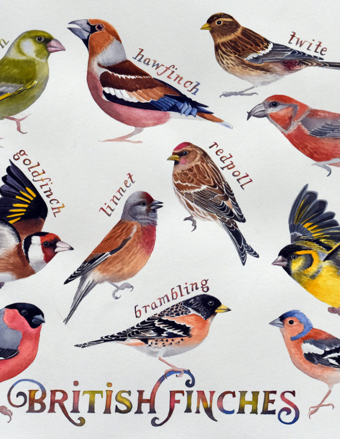 British finches painting