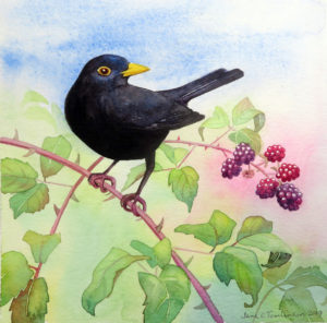 painting of a blackbird and berries