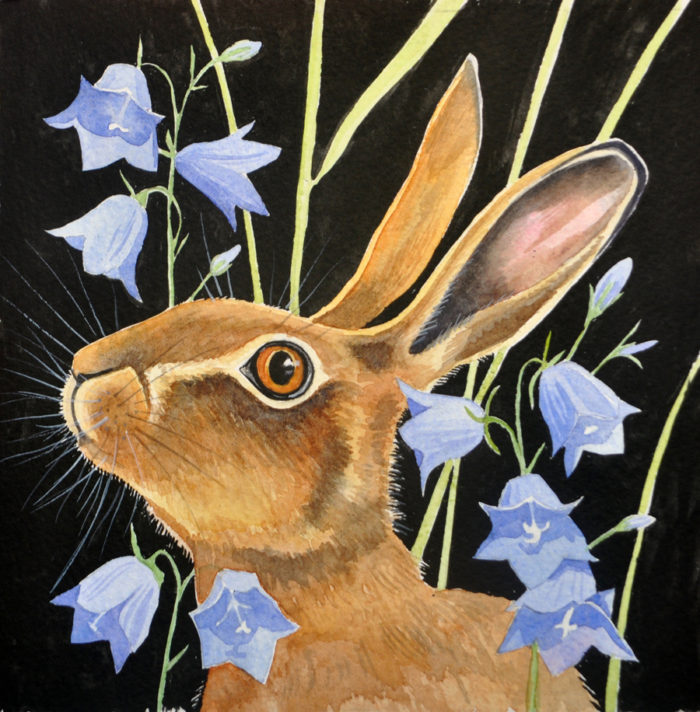 Hare and harebells
