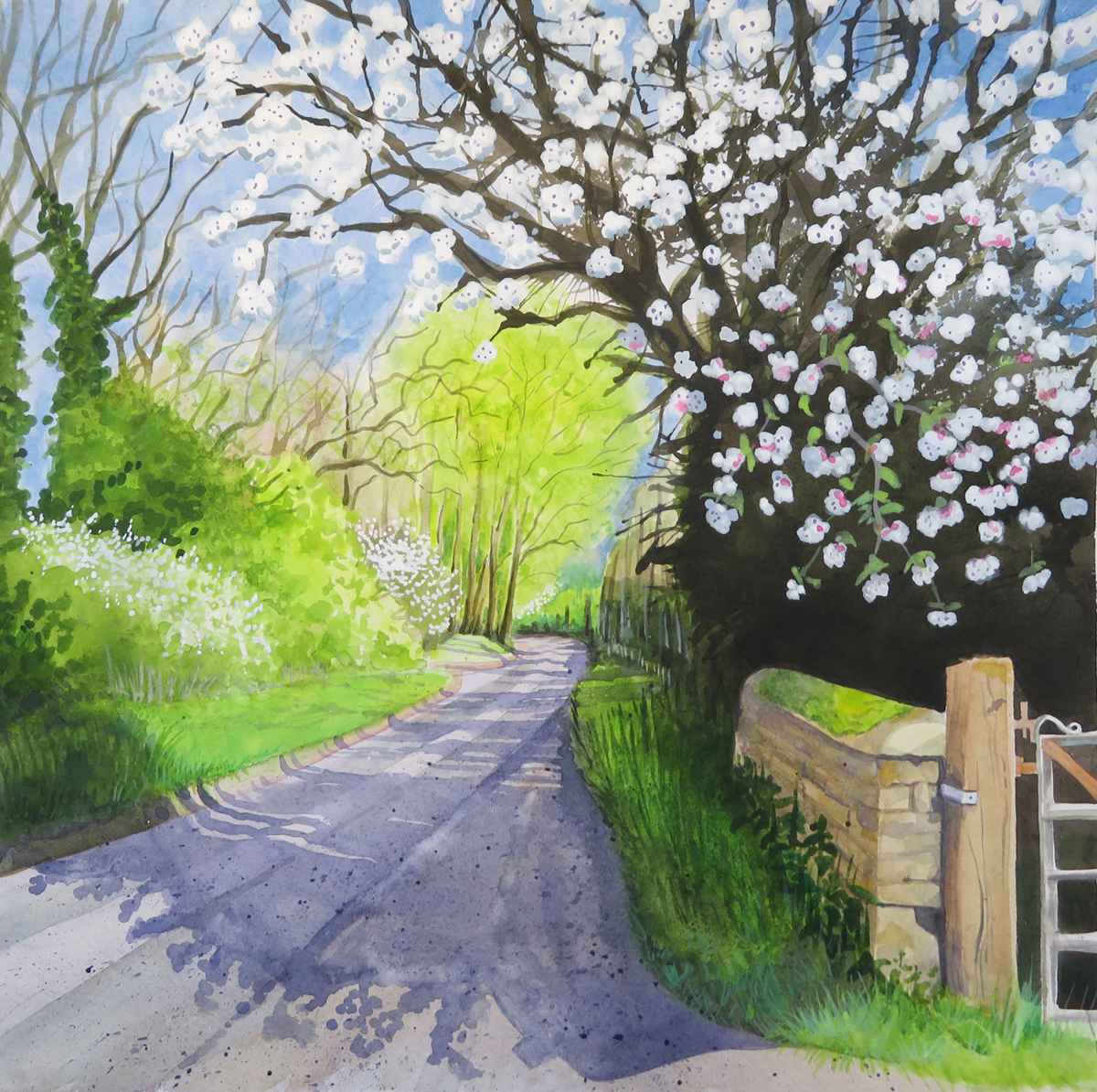 Cherry tree on Pigeon House Lane