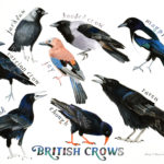 British Crows painting