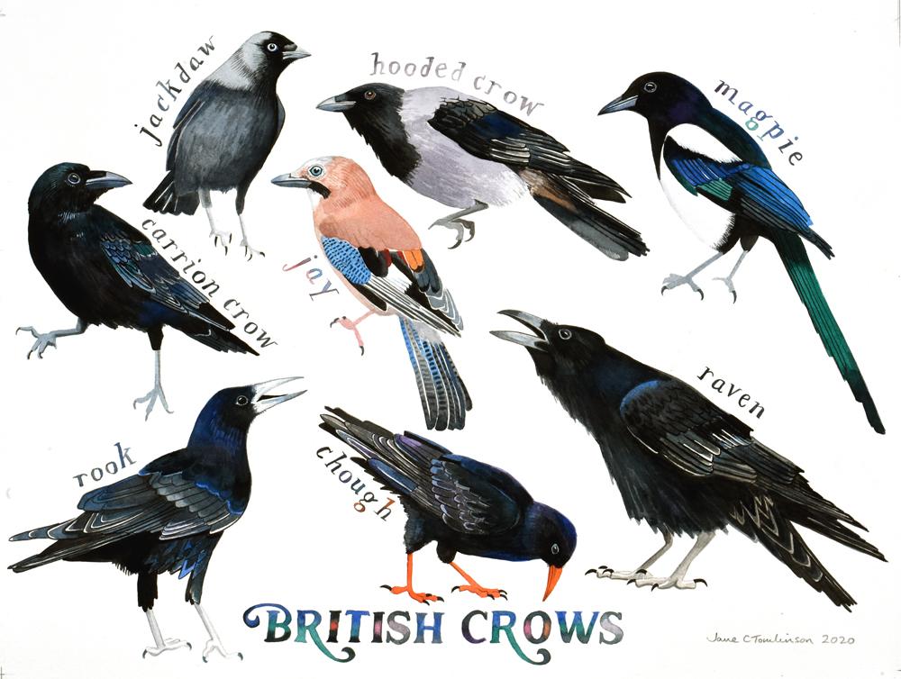 British Crows painting
