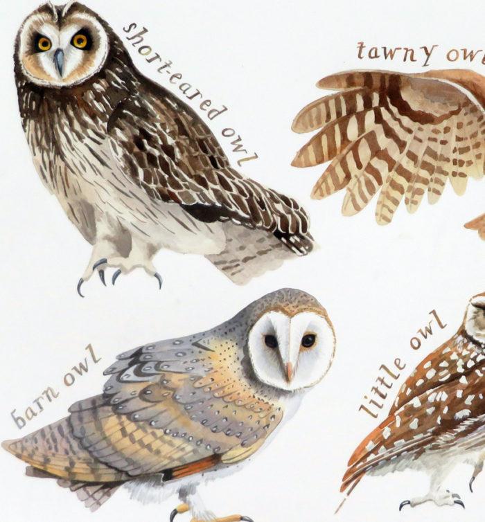 British Owls