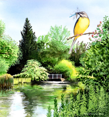 Grey wagtail by the Windrush