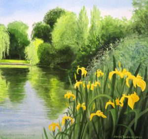 Yellow flags among the willows