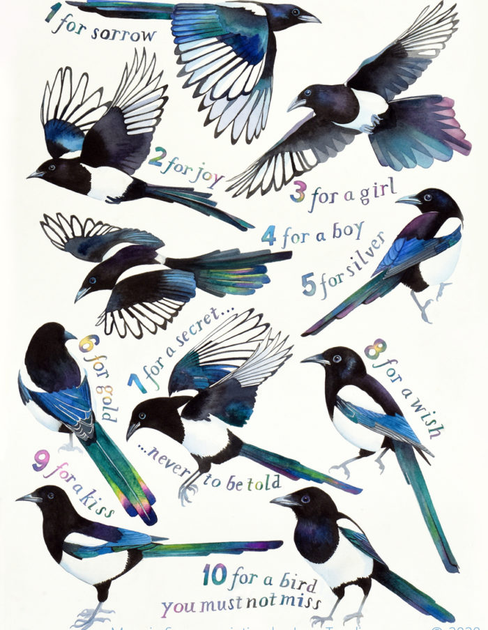 Magpie Song - a painting of the magpie rhyme