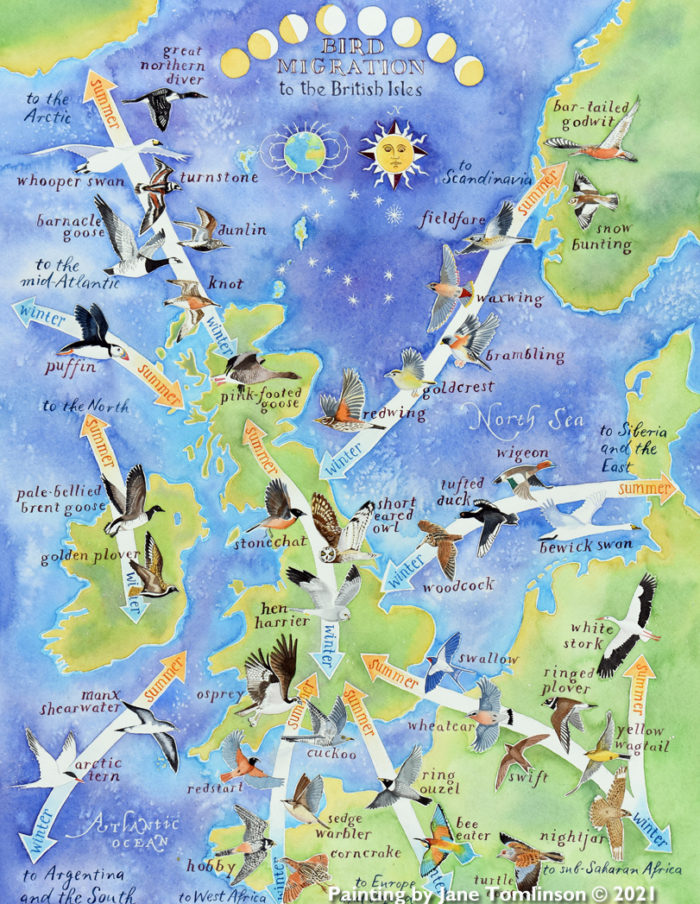 Bird migration map