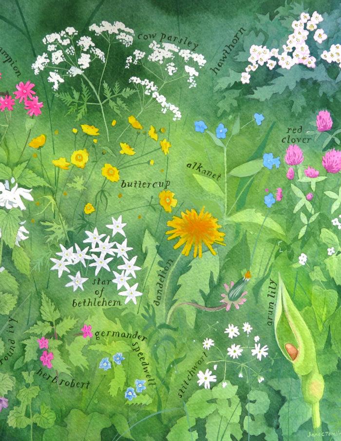 Wildflowers not weeds